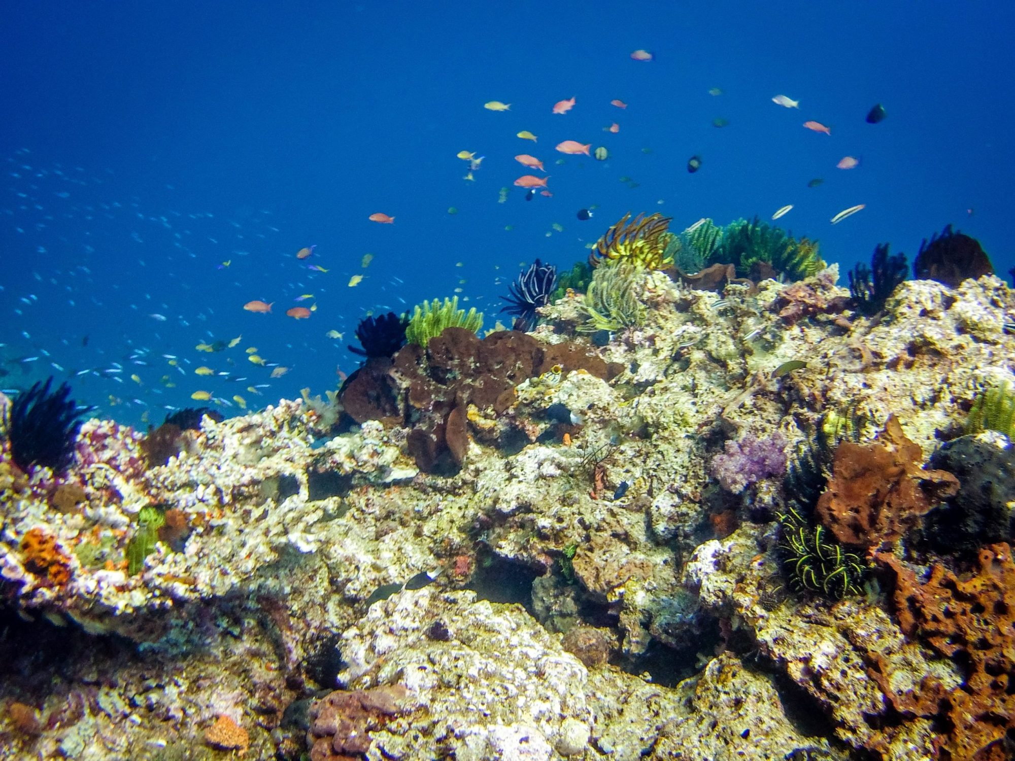 Diving East Timor - beautiful reefs and many small fishes