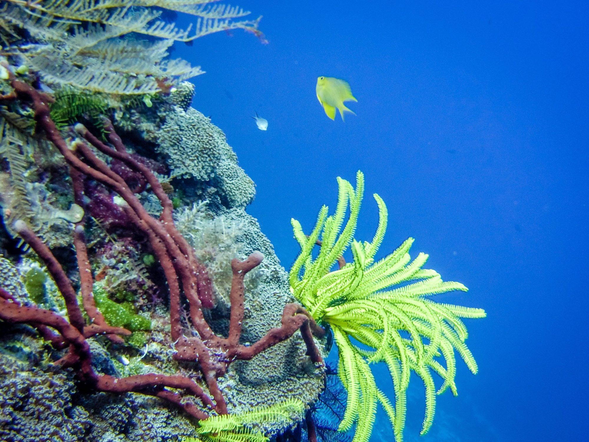 Diving East Timor