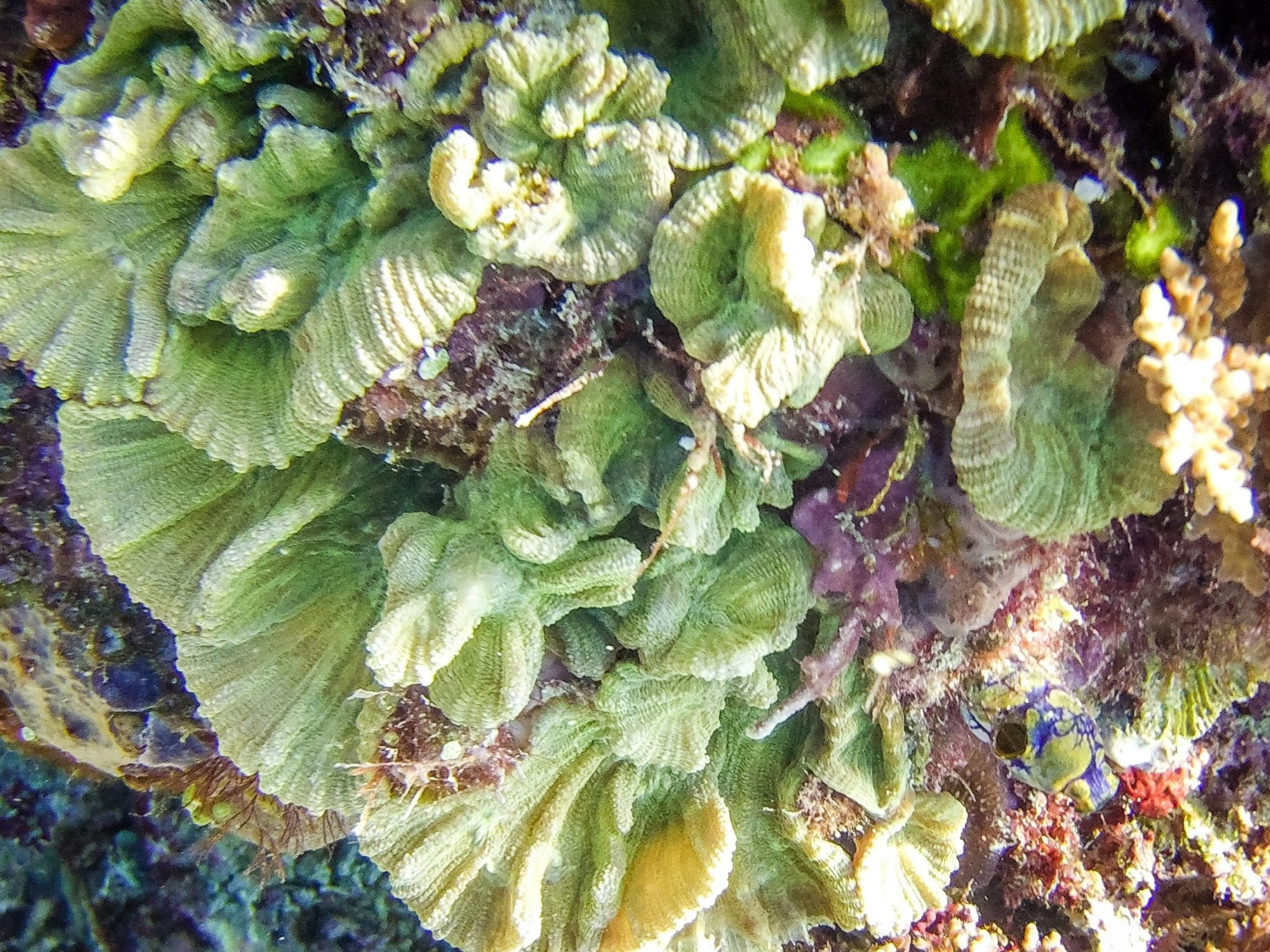 Diving East Timor - amazing soft corals
