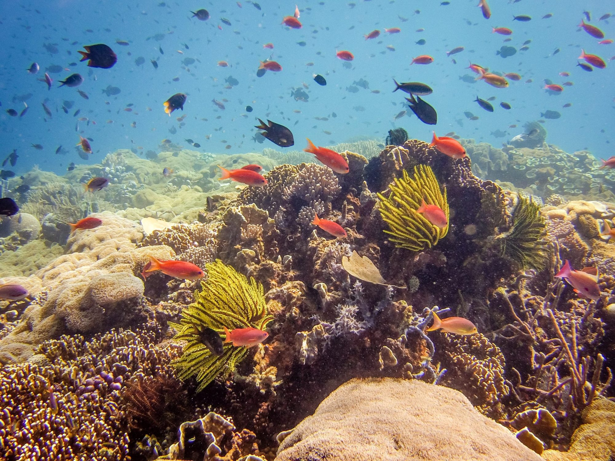 Diving East Timor on the worlds best coral reefs Atarau