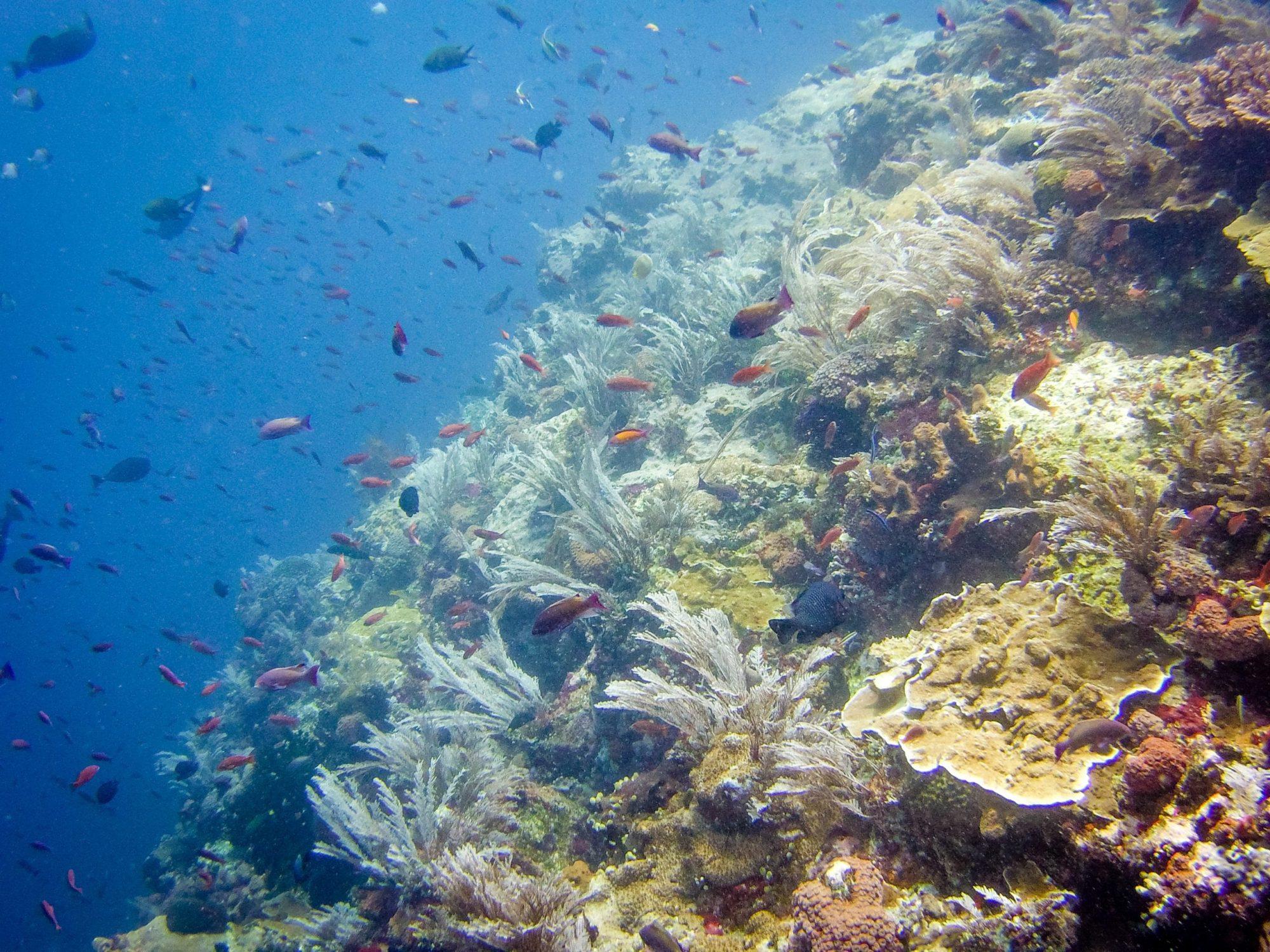 Komodo diving : the reef