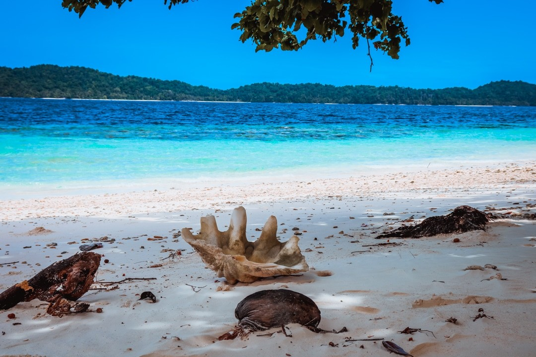 Ilike liveaboard cruise from Raja Ampat to Triton Bay - Huge shell on the beach in pisang island