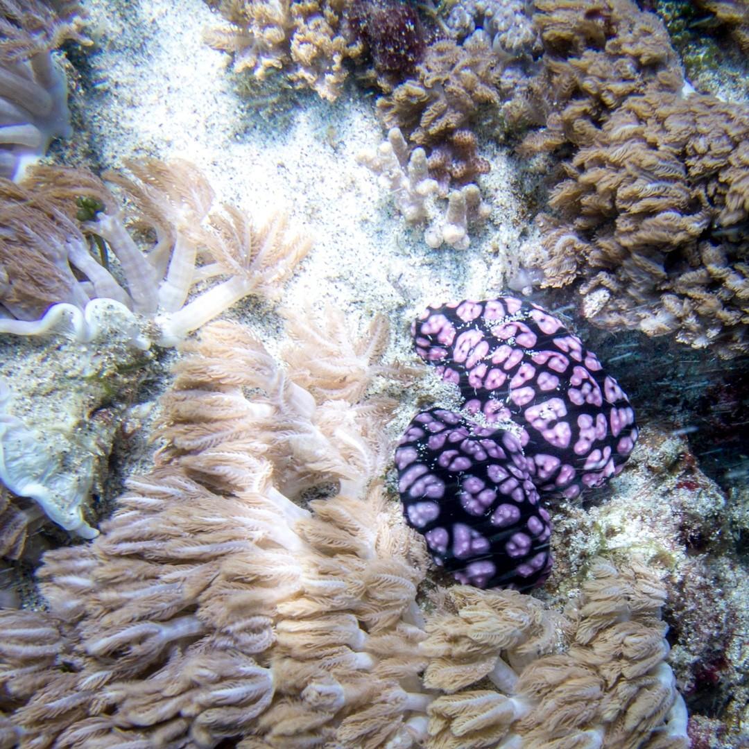 blue lagoon diving Bali