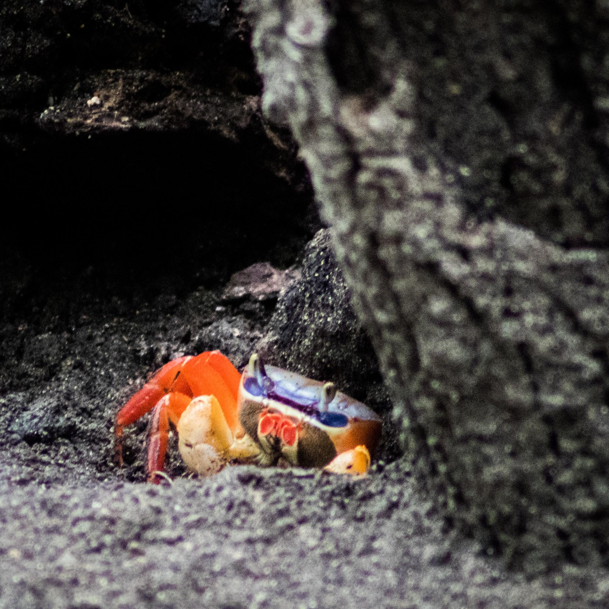 Four Seasons Costa Rica mangrove tour crab