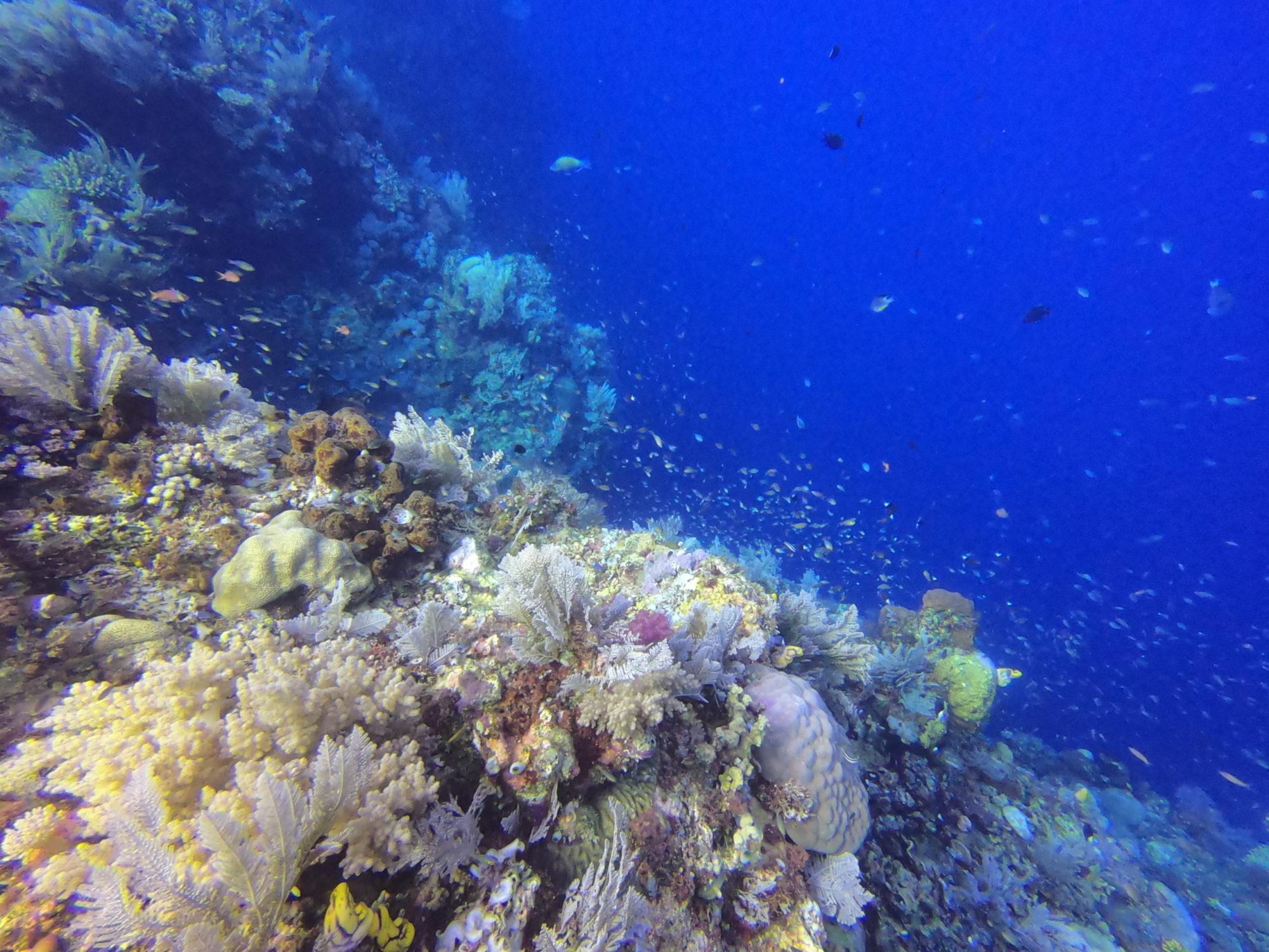 Pulau raja dive site flores