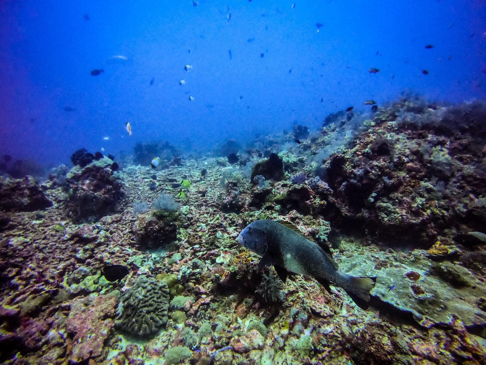 Batu Bolong dive site Komodo