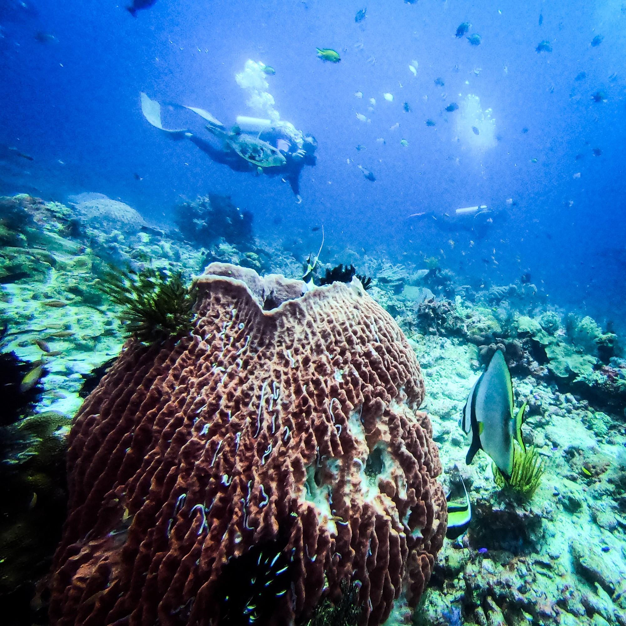 Castle Rock dive site Komodo