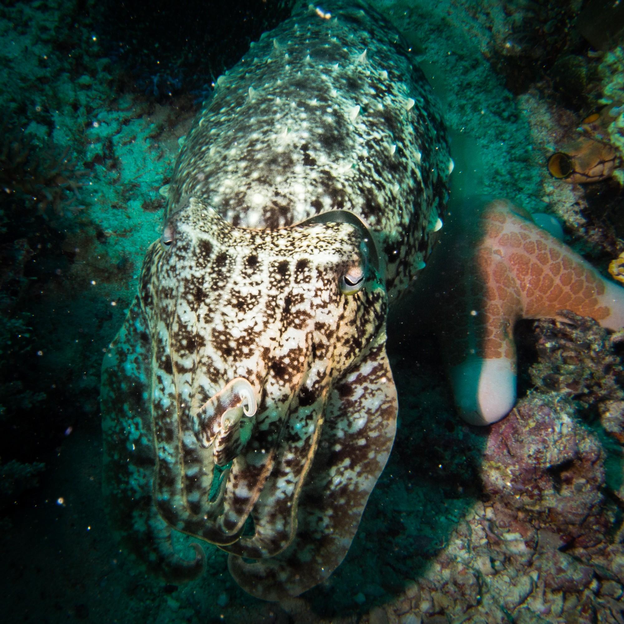 Dambilah Slope dive site Maumere