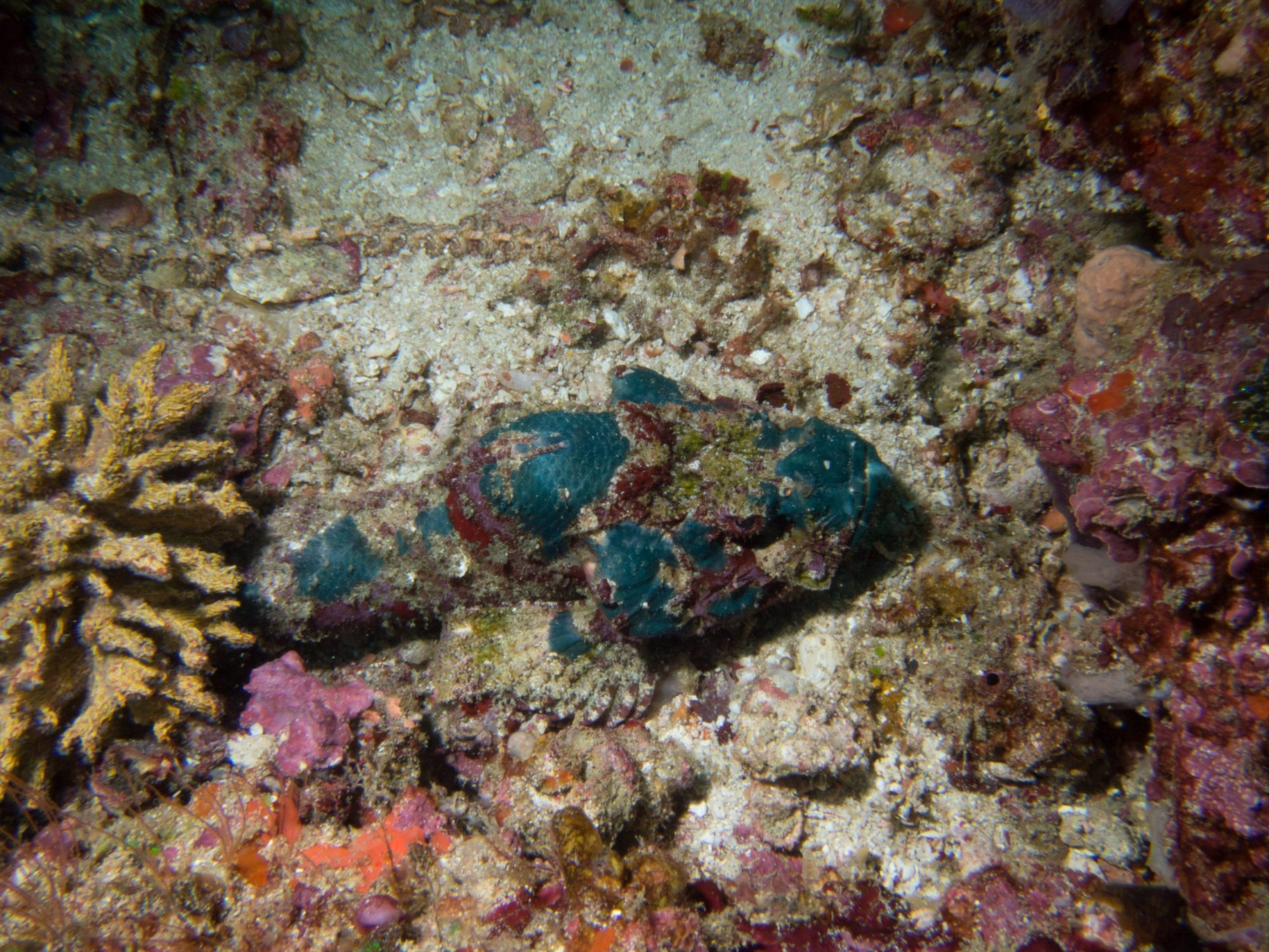 Three sisters dive site Komodo