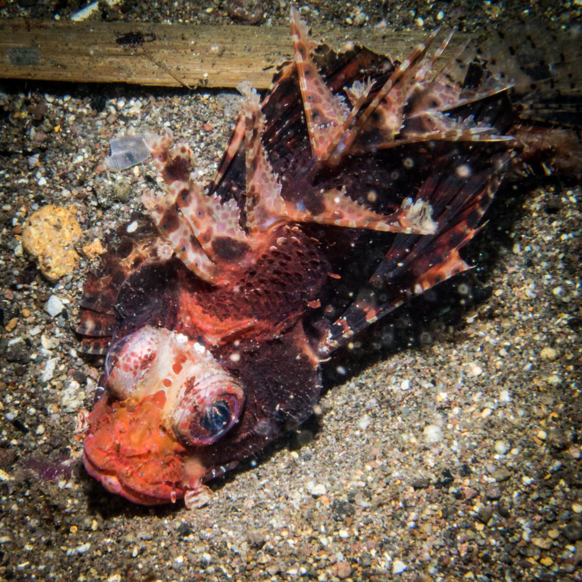 Waiterang wreck dive site Maumere