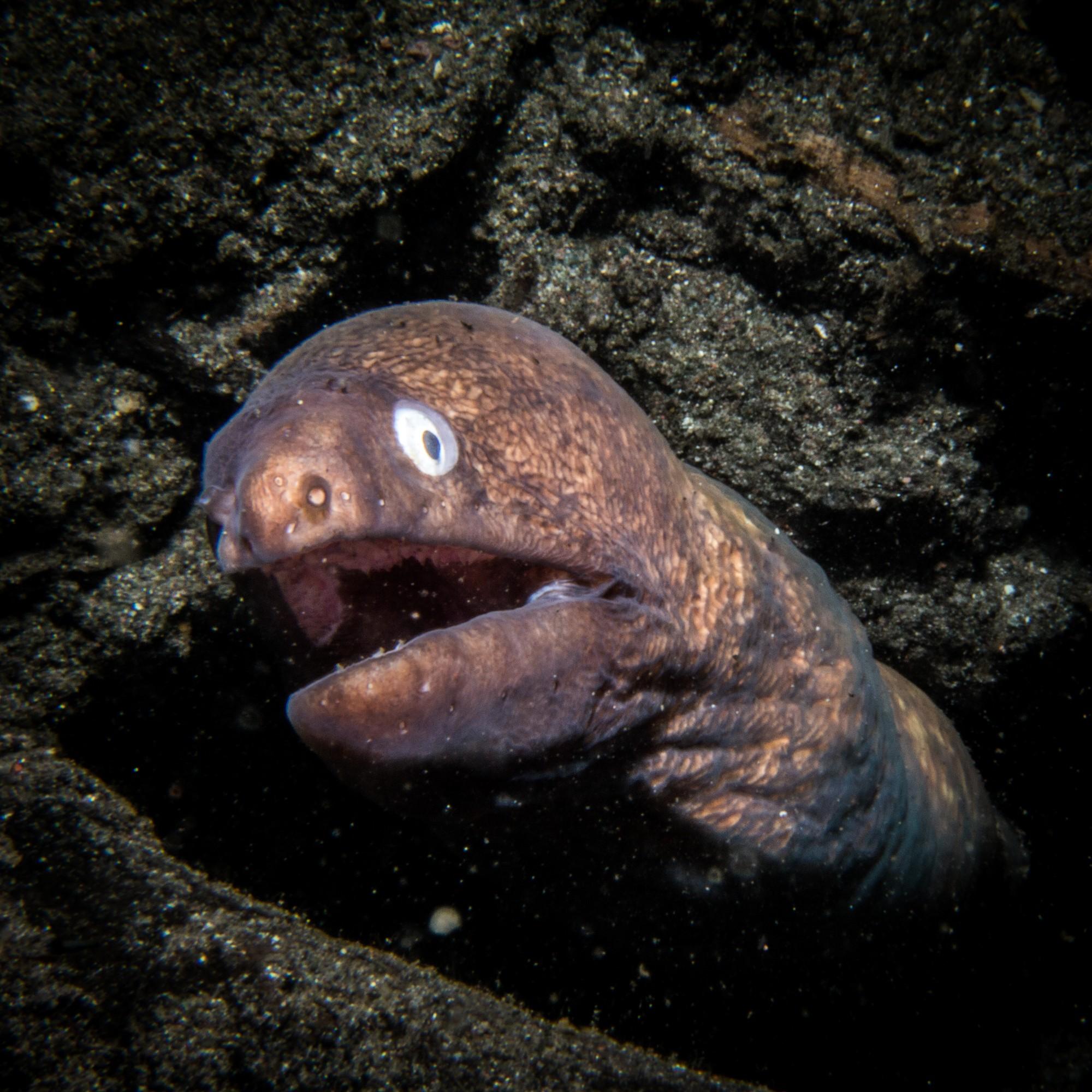 Waiterang wreck dive site Maumere Murray eels