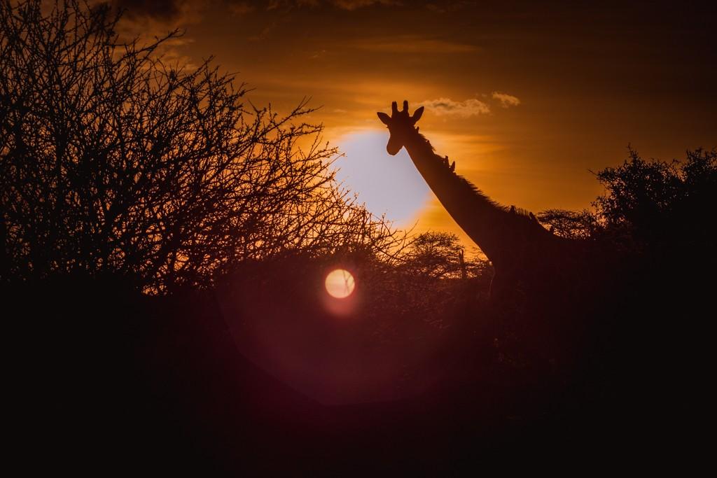 Ol Malo lodge review giraffe
