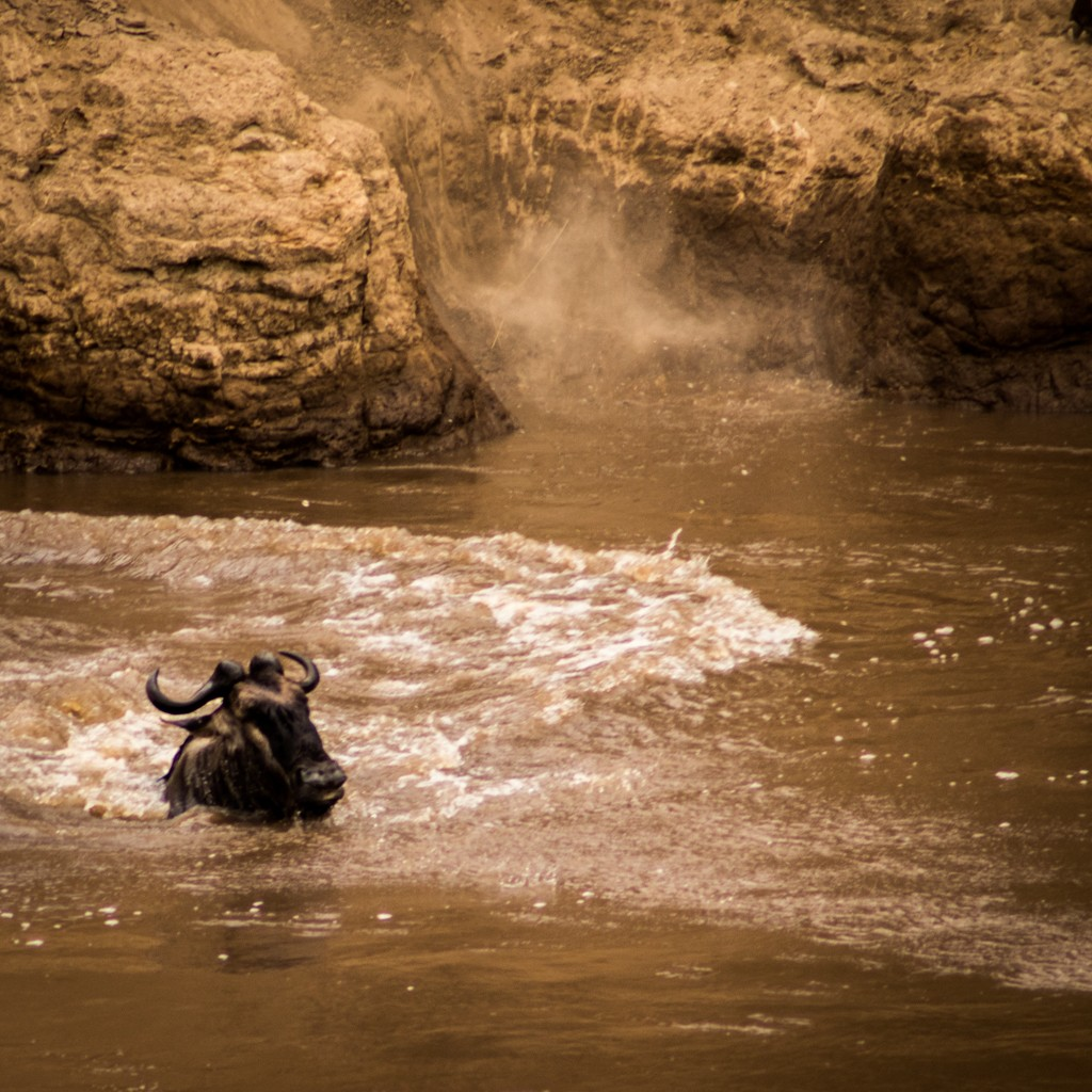 Tangulia Masai Mara wildebeest migration river crossing