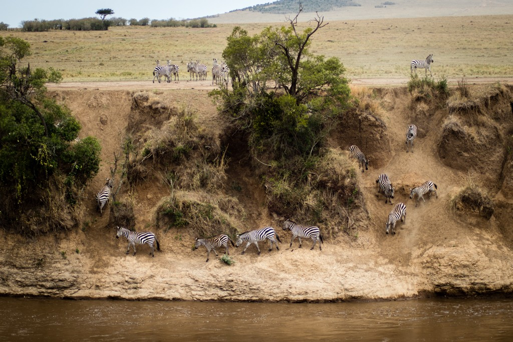 Tangulia Masai Mara wildbeest migration river crossing