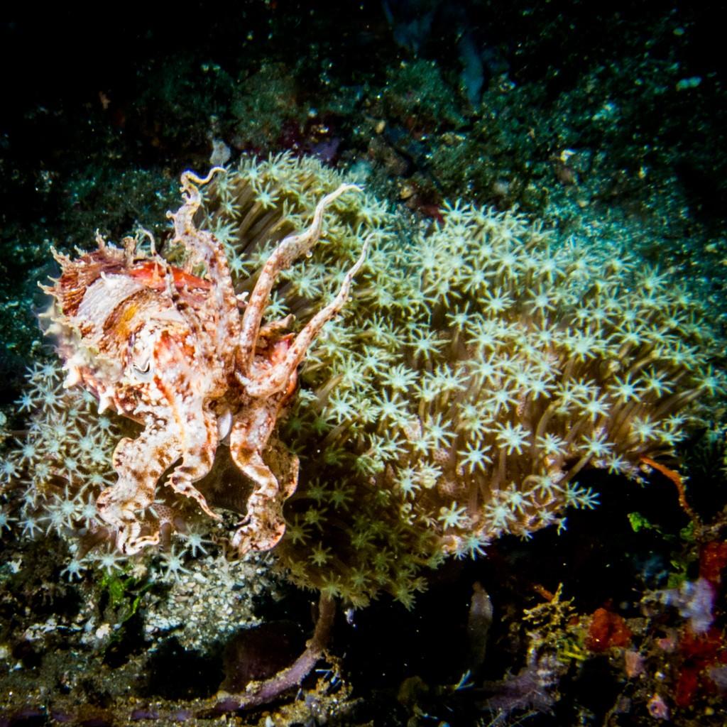 Diving Ambon Laha Bay