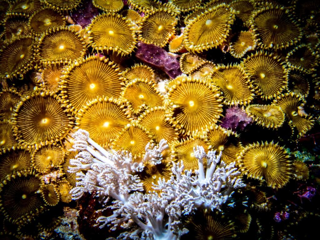 Koon island diving corals