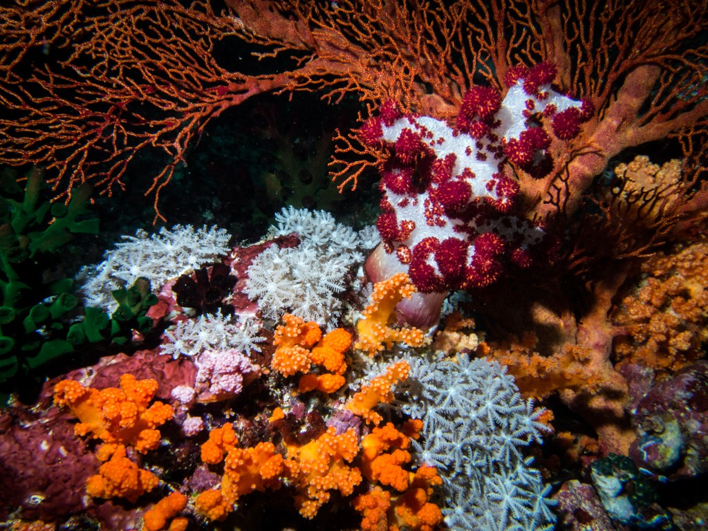 Koon island diving