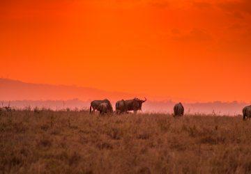 Emakoko safari Nairobi Kenya review sunset
