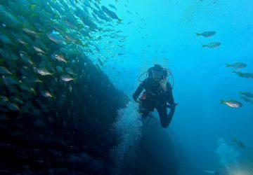 Sydney diving the apartement
